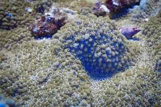 uv koralle und schneckengehäuse-3041
