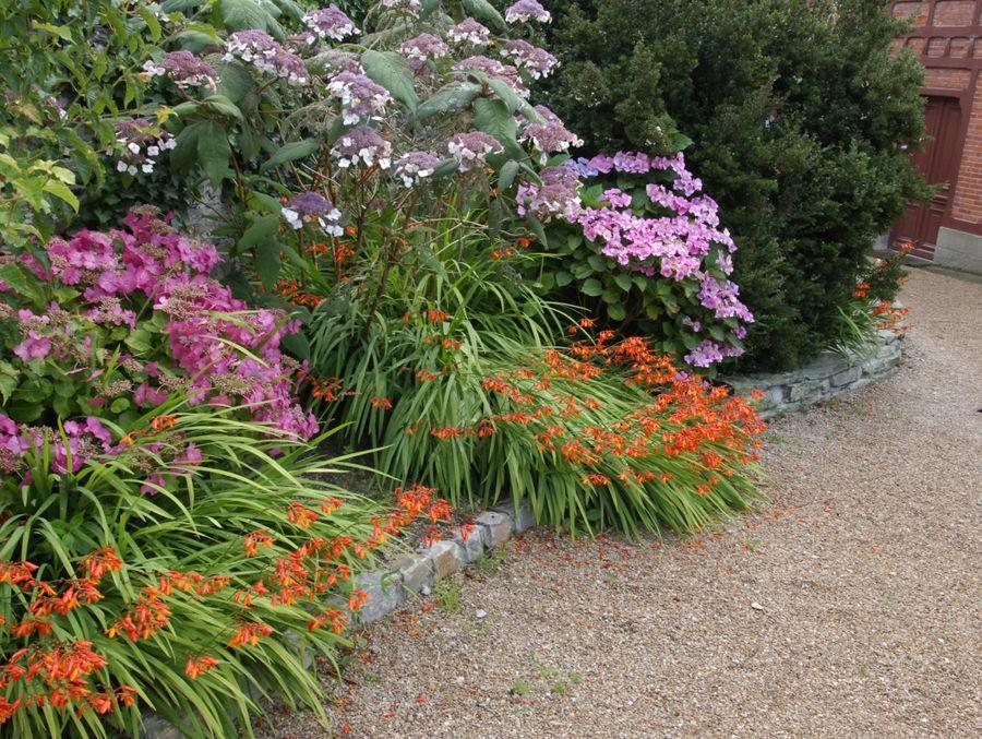 que planter dans une bordure de jardin