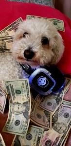 Price to rent Silent Disco headphones