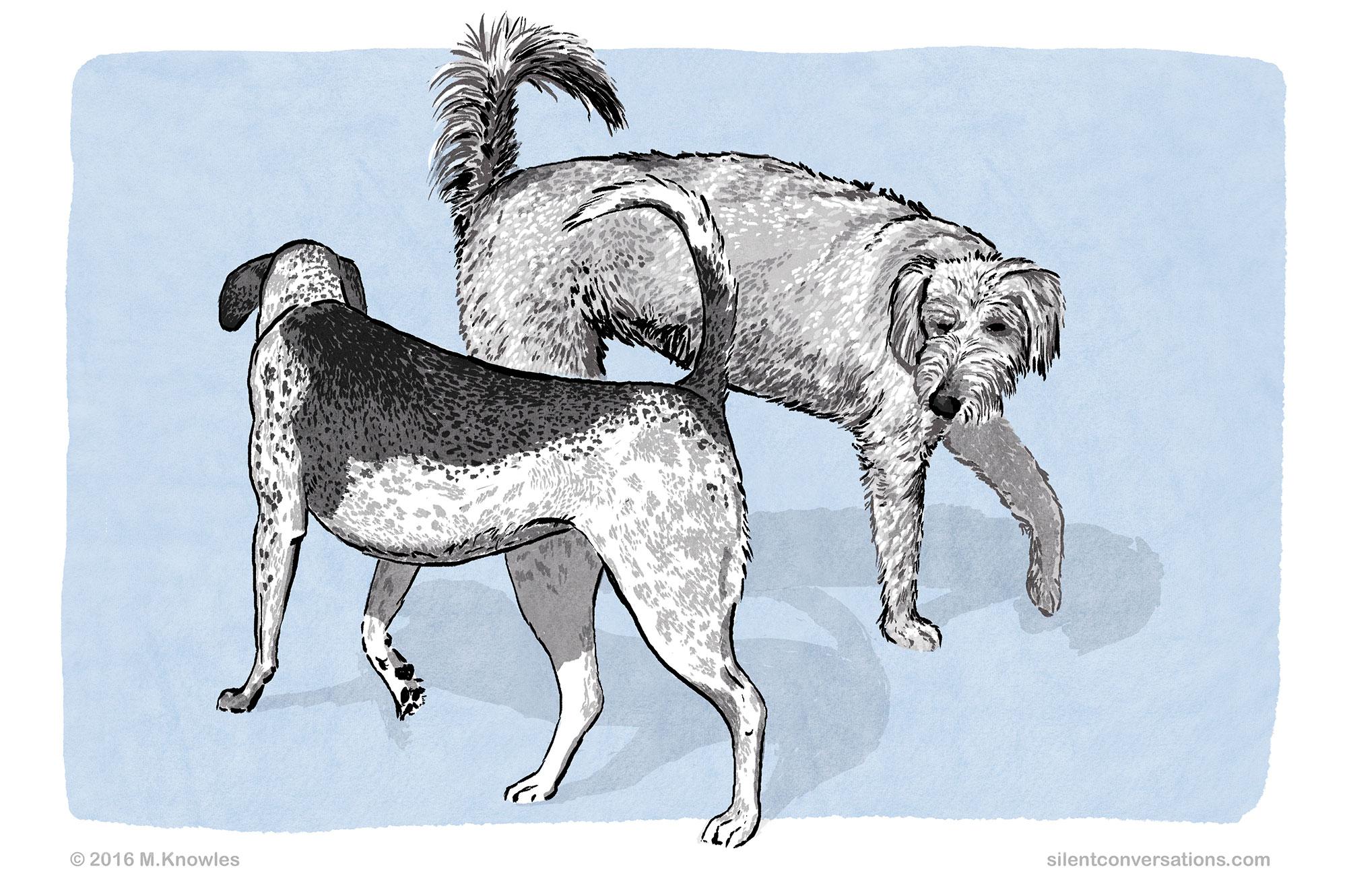 Introduction to Dog Body Language