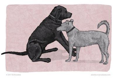 Sitting – Dog Body Language
