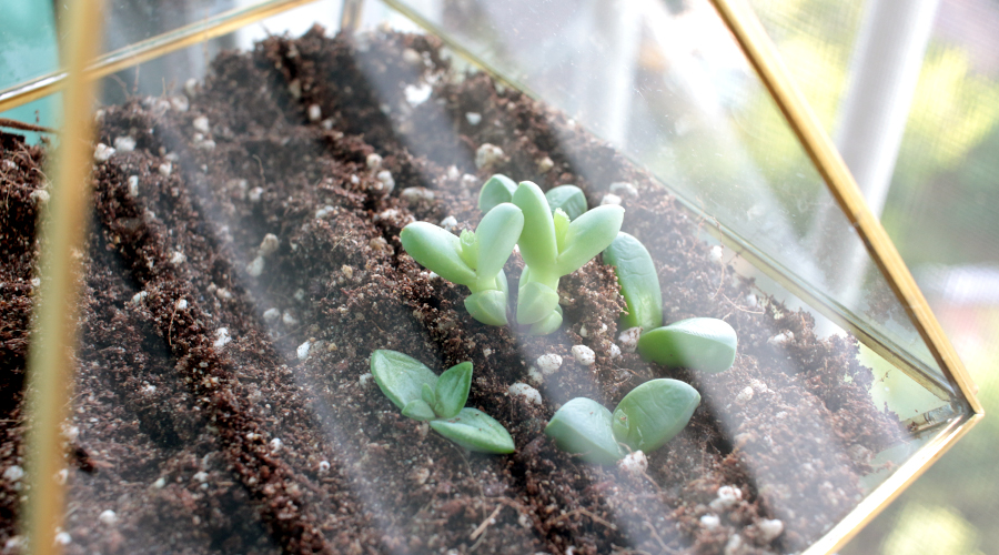 silentlyfree-2016-succulents-terrarium-diy-11