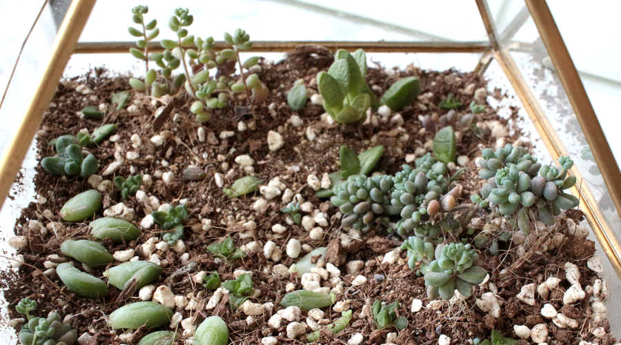 silentlyfree-succulents-how-to-grow-04