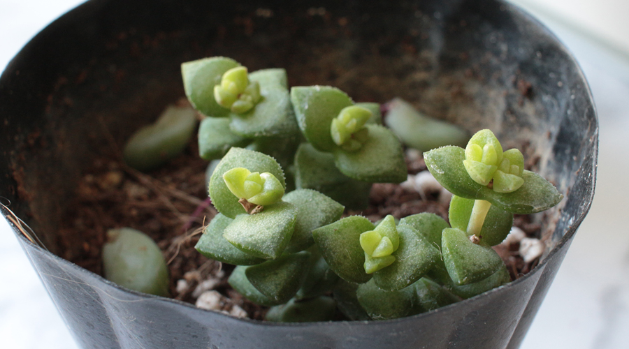 silentlyfree-succulents-how-to-grow-09