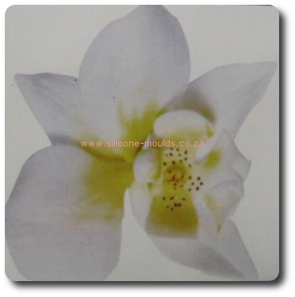 moth orchid cutter1-sil