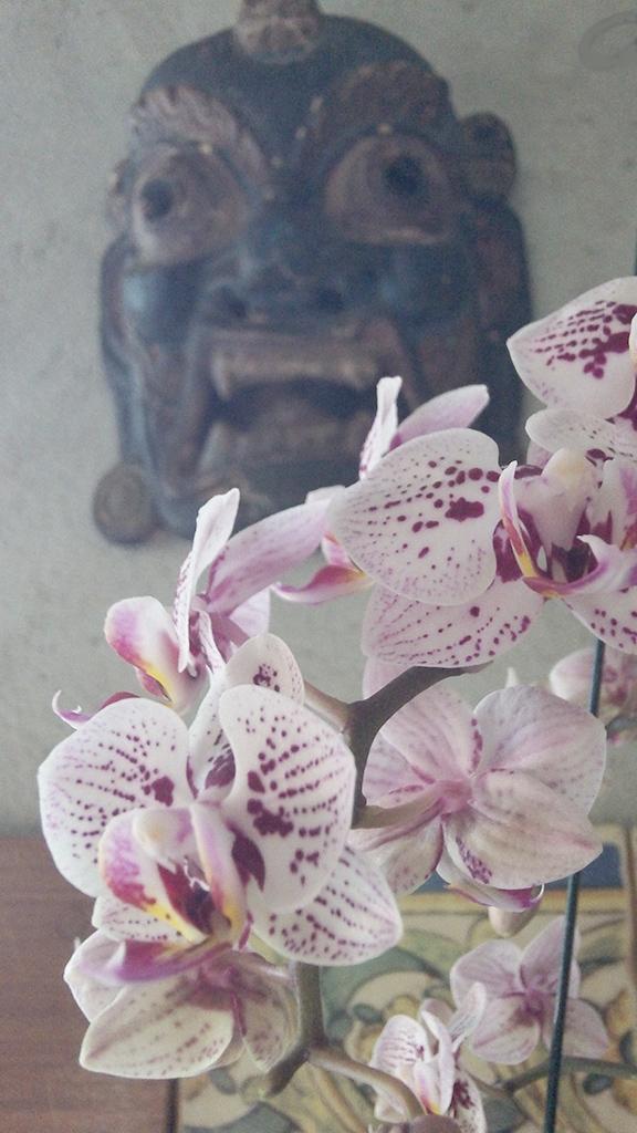 Wild Orchid Brazil