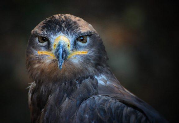 Portrait of wild bird