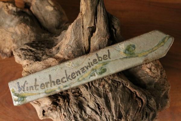 Kraeuterstecker Winterheckenzwiebel