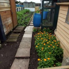 allotment with path and sheds