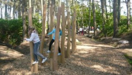 children at woodland play area