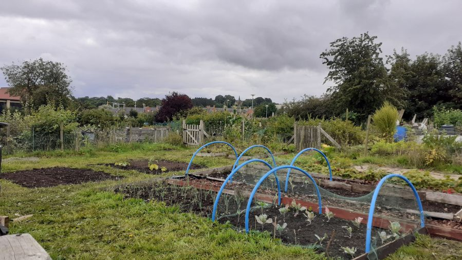 Sunday (8 days since taking the allotment on)