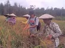 Informasi terkait adat Nebe'e Rau Kalimantan Timur yang unik