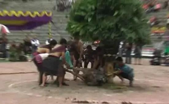 Ulasan terkait dengan Mengalahat Horbo suku Batak di Sumut