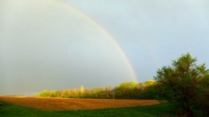 A pure diamond of light. Our backyard this past Friday. Taken as Jude was climbing trees.