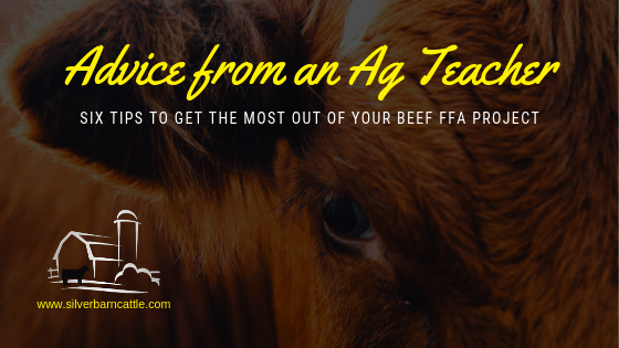 Advice from an Ag Teacher: Six Tips to Get the Most out of Your FFA Beef Project