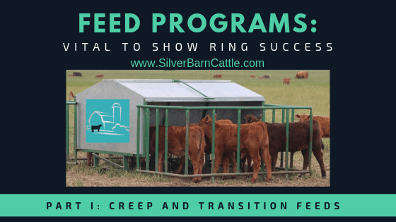 Feed Programs: Vital to Show Ring Success