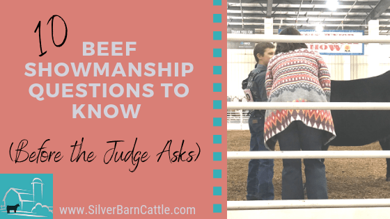 beef showmanship questions