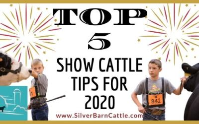 Top 5 Show Cattle Tips and Advice for 2020