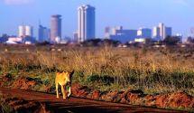 And In Nairobi Silverbird Travel Safari