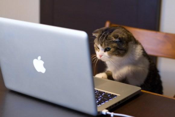 cat_compute
