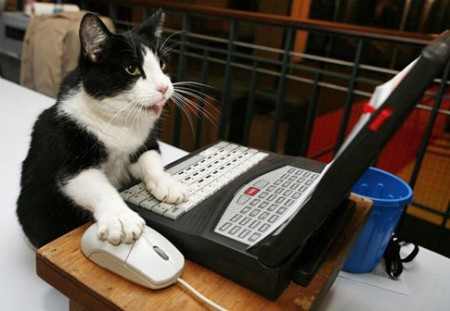 cat-on-computer1
