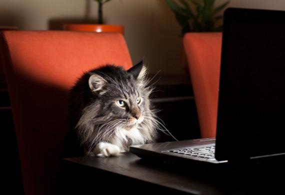 cat_watching