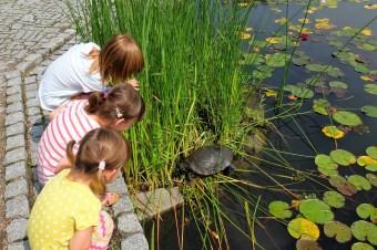 Wrocław z dziećmi: ogród botaniczny na każdą porę roku