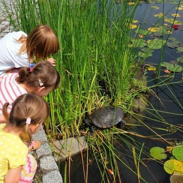 Wrocław z dziećmi (3): ogród botaniczny