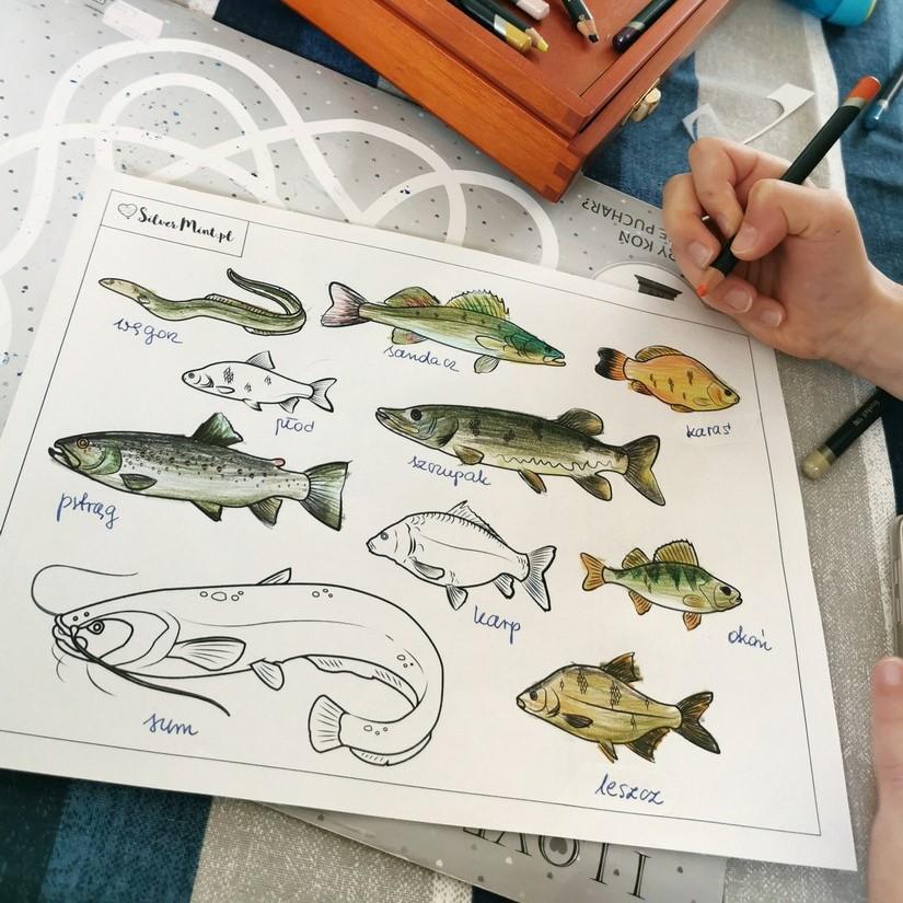 SilverMint blog kolorowanki ryby