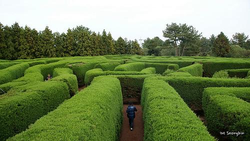 Maze photo courtesy of golbenge (골뱅이)