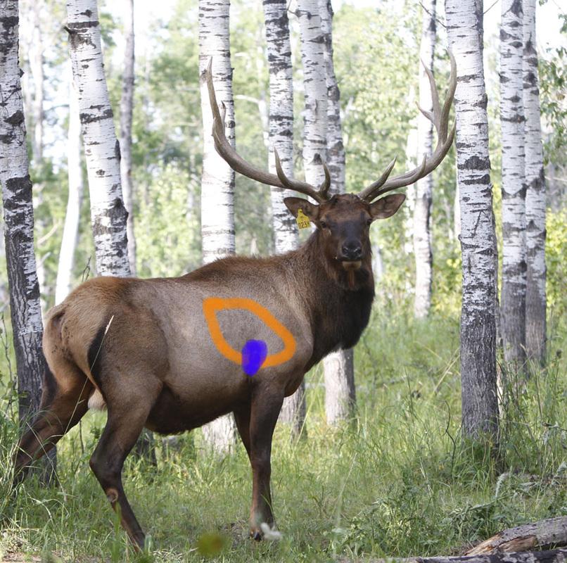 whitetail deer shot placement diagram rj11 phone jack wiring vital organs diagram, deer, get free image about