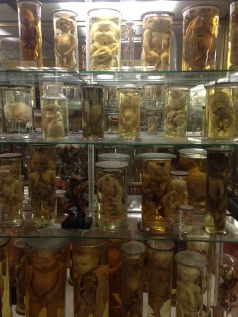 Il paesaggio umano e la medicina breve storia del nostro corpo