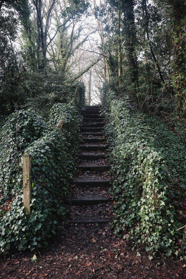 Una scala, l'edera e l'immaginazione di 16 donne