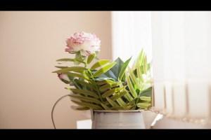 Silvio Palladino Documentary Photography flower pot