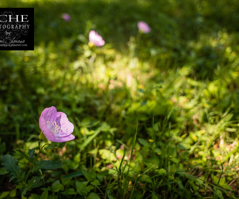 {day 109 project365 2015… grow in the light}