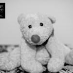 {day 325 project365 2015… teddy}