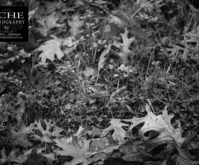 {day 006 project365 2016… rain jeweled grass}