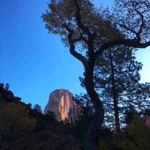 Early morning views along a Kolob Canyons trail at Zion National Park.