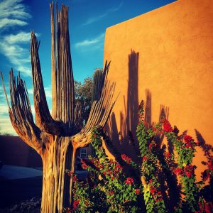 "Saguaro skeleton next to a ""barrio-style"" home."