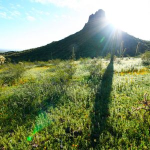 Picacho Peak spring sunrise, with saguaro shadow.