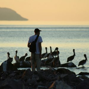 Human and pelicans at Loreto Bay, Baja California Norte, Mexico.
