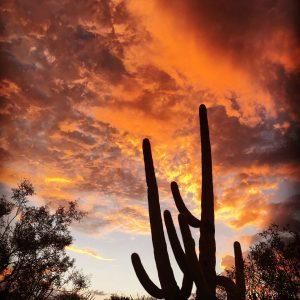 Summer storm over Saguaro National Park East.
