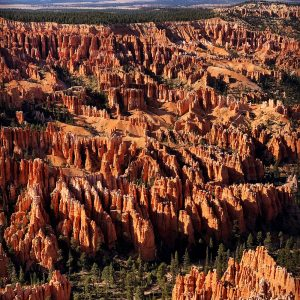 Afternoon glow at Bryce Canyon National Park.