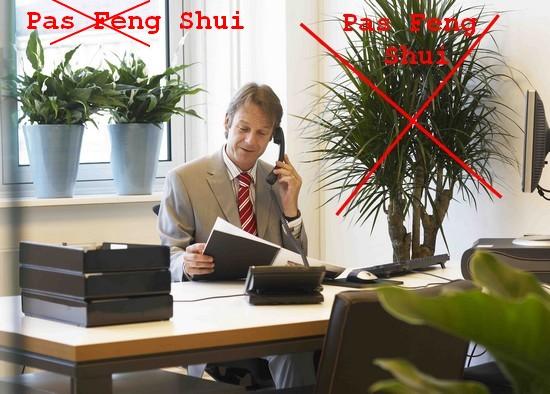 feng shui plantes vertes bureau d entreprise