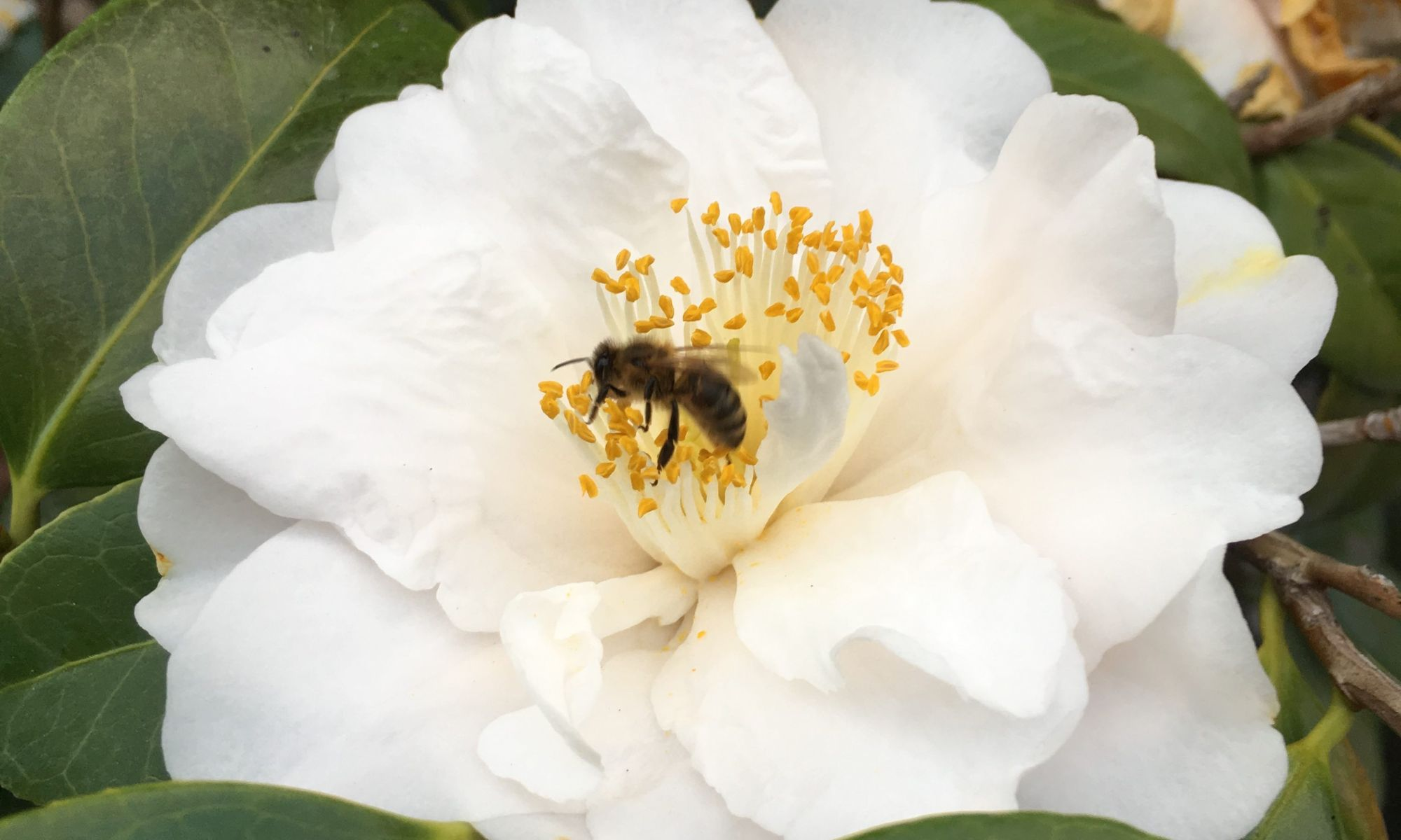Bee Full Cropped
