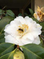 Bee Full