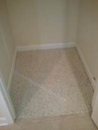 Mildew Carpet