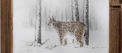 Lynx en hiver <br/> 35 x 50 cm <br/> Crayons couleurs et gris sur fond blanc