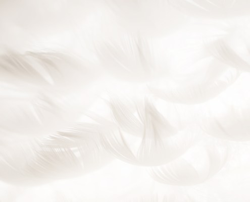 Wallpaper Feather | Freebie