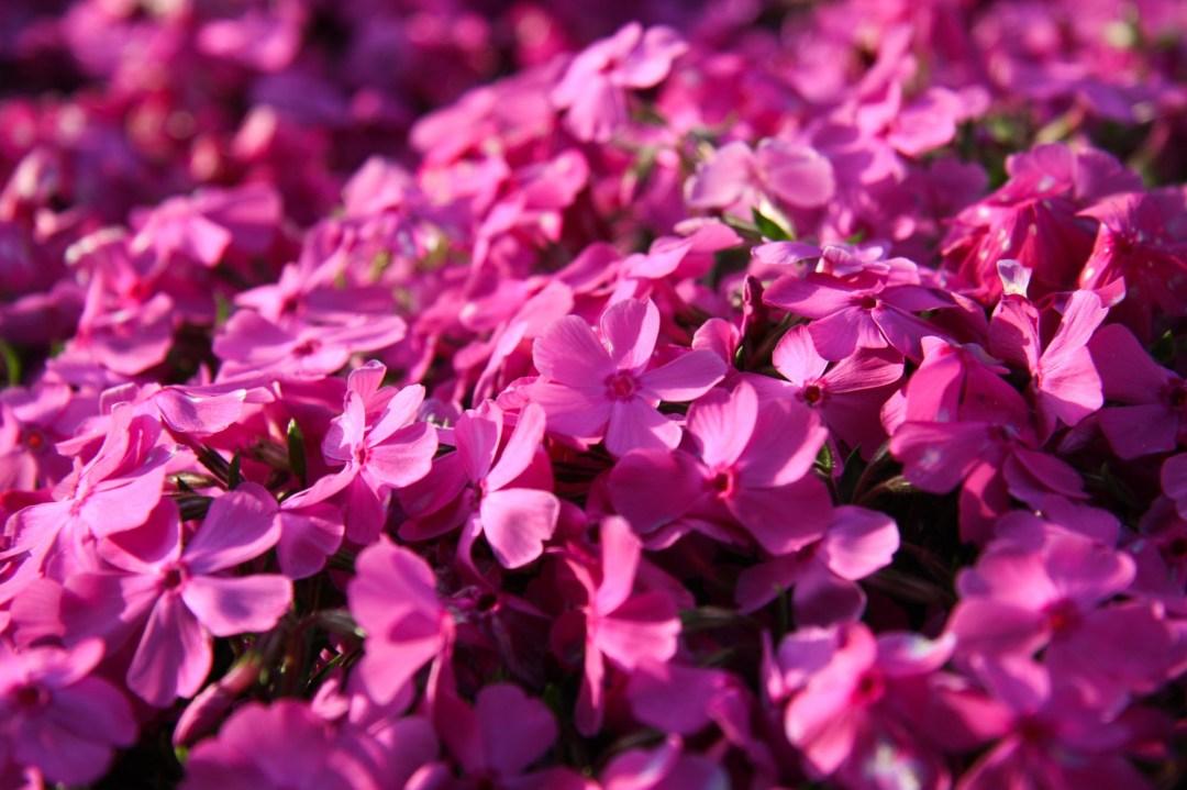 Toshiyuki Kuroki Garden 020
